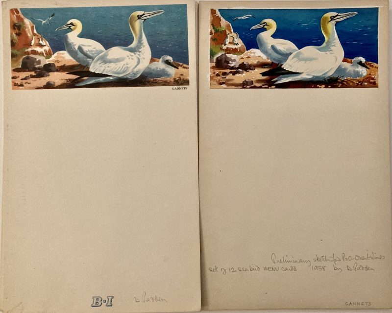original artwork for menu Gannets